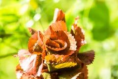 La vue de nature de plan rapproché de la texture rouge de feuille sur le vert a brouillé le backgro Photo stock