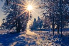 La vue de paysage d'hiver met en place le soleil de rayons de neige couvert par forêts Image stock