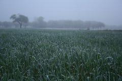 La vue de rozen l'herbe sur le pré Photographie stock