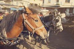 La vue de vintage des chevaux attendent leur tour à prince Islands Photographie stock libre de droits