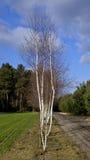 La vue des forêts, les zones et les plaines retiennent le polonais Images stock