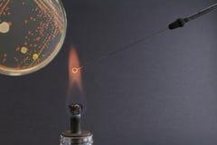 La vue des microbiologist's observent sur la boucle en flamme pendant le passage Photos libres de droits