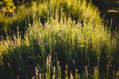 La vue du champ avec s'abaisse allumé par la faible luminosité images libres de droits