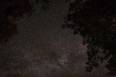La vue du ciel étoilé par les branches des arbres photos stock