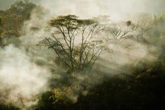La vue du feu de forêt sur la taille Images libres de droits