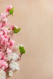 La vue du ressort fleurit sur un en bois, avec l'espace pour le thème des textes, de ressort ou d'été Photos stock