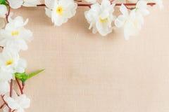 La vue du ressort fleurit sur un en bois, avec l'espace pour le thème des textes, de ressort ou d'été Photos libres de droits