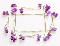 La vue faite à partir de la petite forêt fleurit les violettes pourpres sur un fond blanc avec l'espace de copie Photos stock