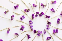 La vue faite en petite forêt fleurit la violette sur le fond blanc Image libre de droits