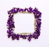 La vue florale de place de modèle faite en petite forêt fleurit la violette avec l'espace vide pour le texte sur a sur le fond bl Photos stock