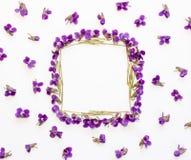 La vue florale de place de modèle faite en petite forêt fleurit la violette avec l'espace vide pour le texte sur a sur le fond bl Images stock