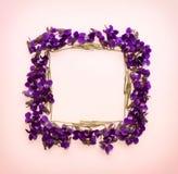 La vue florale de place de modèle faite en petite forêt fleurit la violette avec l'espace vide pour le texte sur a sur le fond ro Image libre de droits