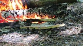 La vue gentille du feu brûlant avec des étincelles et les flammes rouges se ferment vers le haut de la vue Bois brûlant dans la c clips vidéos