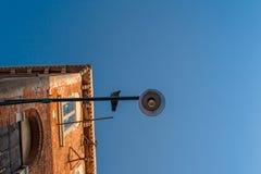 La vue inférieure du réverbère traditionnel avec une séance a plongé oiseau regardant à l'appareil-photo une vieille maison vénit Photos stock