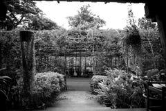 La vue monochrome de photo est le jardin Image stock