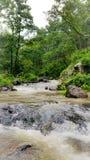 La vue naturelle de la rivière de narmada traverse sauvage image libre de droits