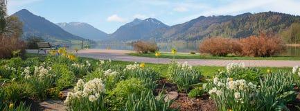La vue panoramique au schliersee de lac avec la station thermale fait du jardinage au printemps image libre de droits