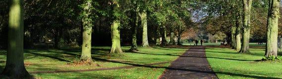 La vue panoramique de l'arbre a rayé la promenade sur le domaine de pays Photographie stock libre de droits