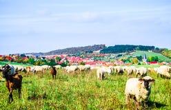 La vue panoramique sur des moutons vivent en troupe et village de Benzingerode en germe images libres de droits