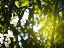 La vue par l'arbre laisse la tache floue defocused Images libres de droits