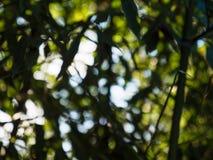 La vue par l'arbre laisse la tache floue defocused Photos stock