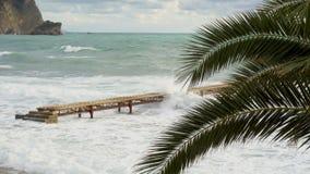La vue par le palmier, haut étroit de feuilles vertes, vagues de mer se cassent sur le pilier clips vidéos