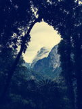 La vue par les arbres avec la montagne couverte de nuage complète Images libres de droits
