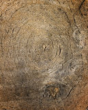 La vue supérieure du bois a coupé avec le modèle de cercle Photographie stock