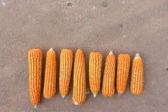 La vue supérieure, les grains doux dans la récolte assaisonnent Photos libres de droits