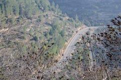 La vue supérieure sur la route s'est étendue par une grande forêt Images libres de droits
