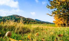 La vue sur le champignon et la chute aménagent en parc à côté de la forêt de Harz dans Germa images libres de droits