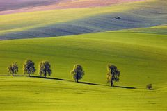 La vue sur les châtaignes et le tracteur fertilisent un champ en Moravie du sud photo stock