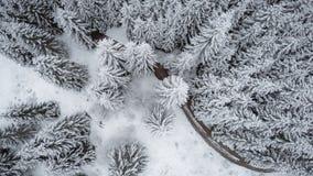 La vue verticale de la neige a couvert des sapins Photographie stock libre de droits