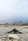 La yoga practicante de la muchacha en las rocas se coloca en una piedra Imagen de archivo
