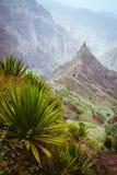 La yuca planta el crecimiento en la tierra árida a lo largo de la manera de la trayectoria del senderismo hacia el pico de montañ Fotografía de archivo libre de regalías