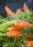 La zanahoria Imágenes de archivo libres de regalías
