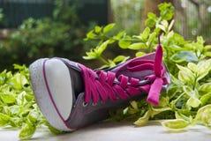 La zapatilla de deporte de lujo con el color de rosa ata en hierba verde Foto de archivo libre de regalías