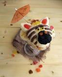 La zebra è fatta del gelato Fotografia Stock