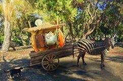 La zebra viaggia con gli amici Fotografia Stock