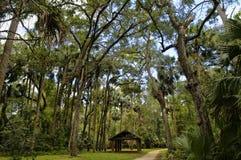 La zona de recreo en el bosque del Estado de Ocala situado en Juniper Springs la Florida fotografía de archivo
