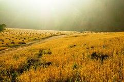 La zone d'or Image libre de droits