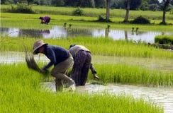 la zone a effectué des sources de paddy de méthane d'homme Image libre de droits