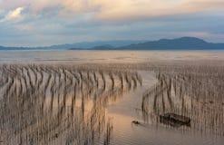La zone intertidale côtière photographie stock libre de droits