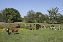 La zone rurale avec une variété effraye le pâturage entouré Image stock