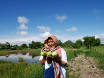 La zucca bianca del sego o della zucca o il melone di conservazione cinese a graden Fotografie Stock Libere da Diritti