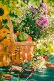 La zucca del giardino del raccolto di autunno del canestro di caduta fruttifica fiore variopinto immagine stock libera da diritti