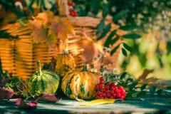 La zucca del giardino del raccolto di autunno del canestro di caduta fruttifica fiore variopinto fotografie stock