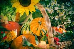 La zucca del giardino del raccolto di autunno del canestro di caduta fruttifica fiore variopinto immagine stock