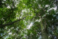 Laag die gezichtspunt van bomen wordt geschoten Stock Foto's