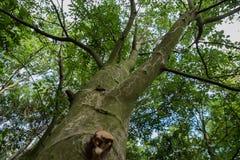 Laag die gezichtspunt van bomen wordt geschoten Stock Foto